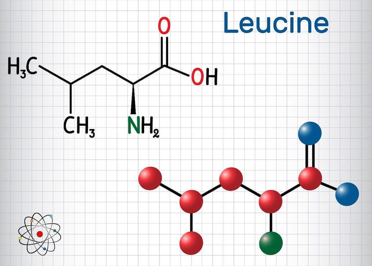 Leucine vs isoleucine: leucine chemical composition